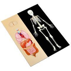Магнитная анатомия
