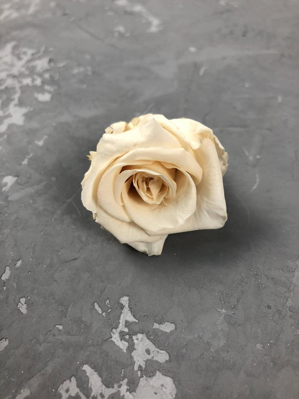 Роза классическая нежно-желтая d=3-3,5 см