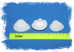 Анадара 2 - 4 см, уп. 250мл.