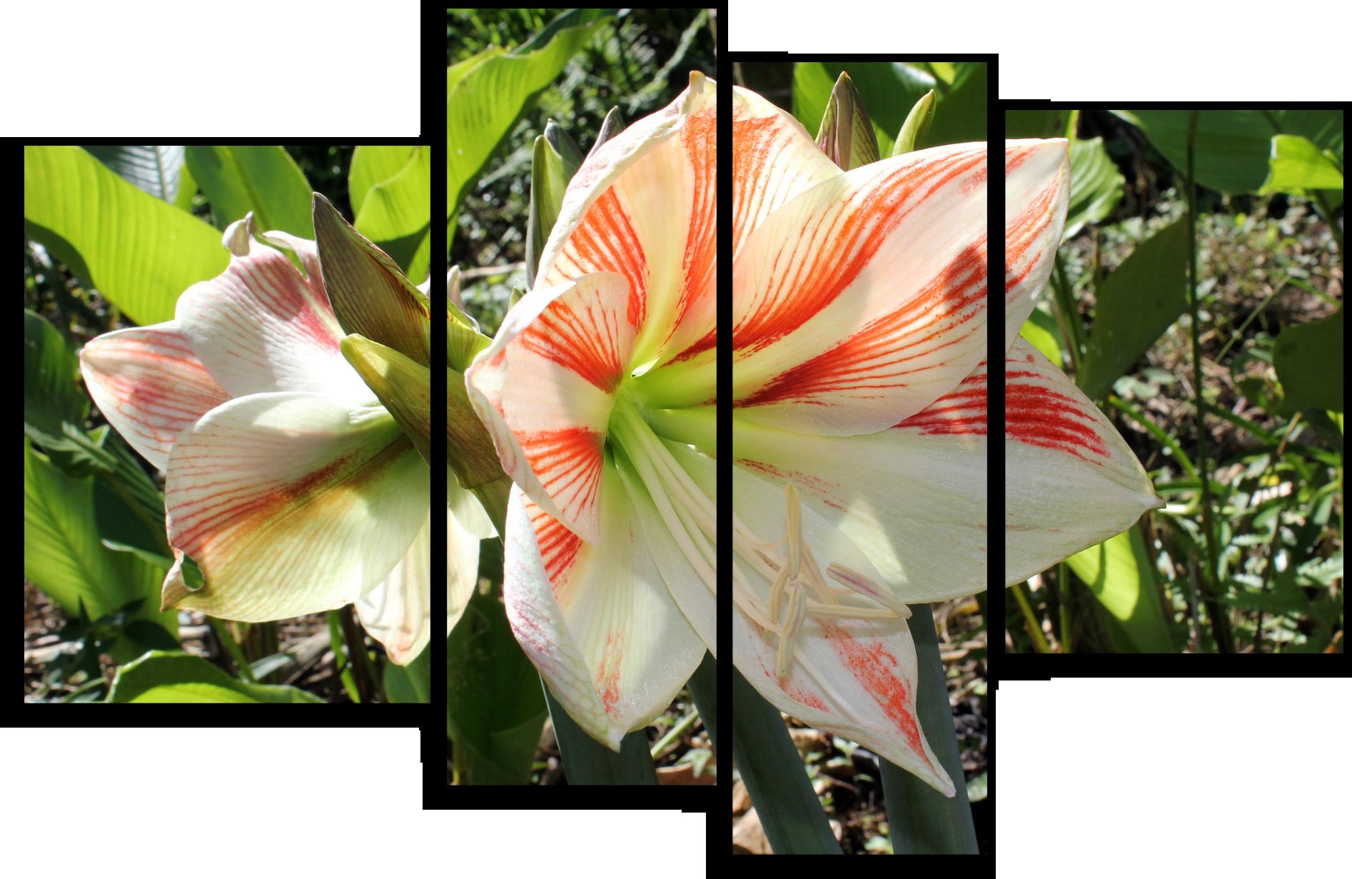 """Цветы Модульная картина """"Лилия """" М674.png"""