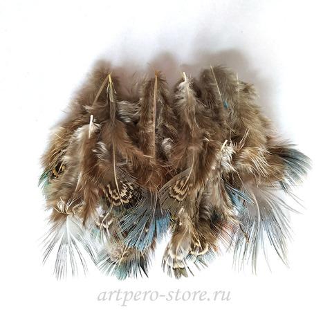 Перья фазана, 5-8 см.  20 шт.