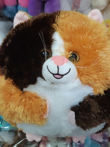Веселый круглый кот