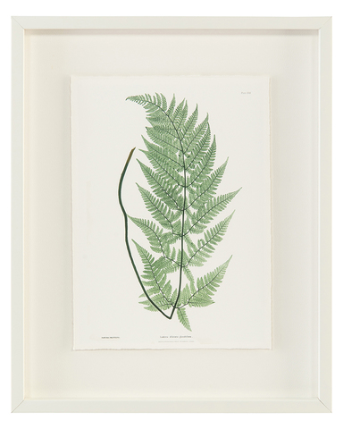 Antique Frond IV