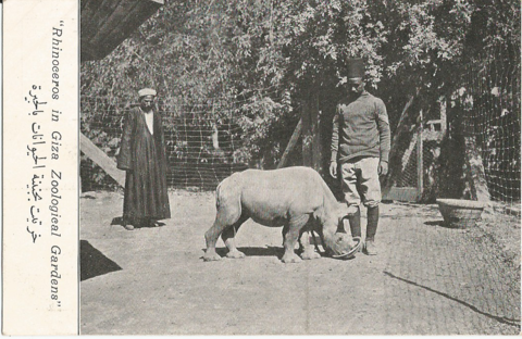 Rhinoceros in Giza Zoological Gardens