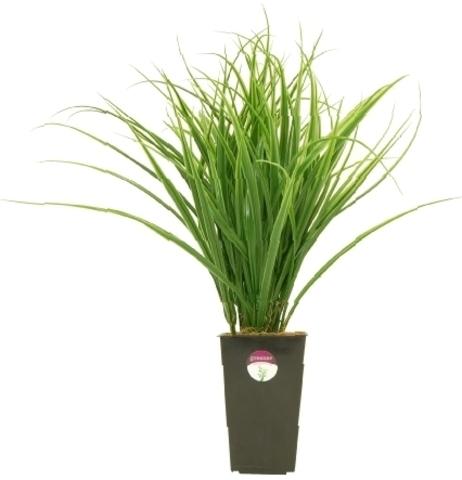 Растение иск.Осока Кабо,45см,12052
