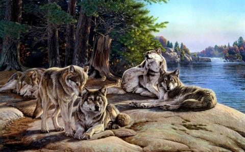 Алмазная Мозаика + Багет 40x50 Отдых стаи волков у озера (арт. DA-0486)