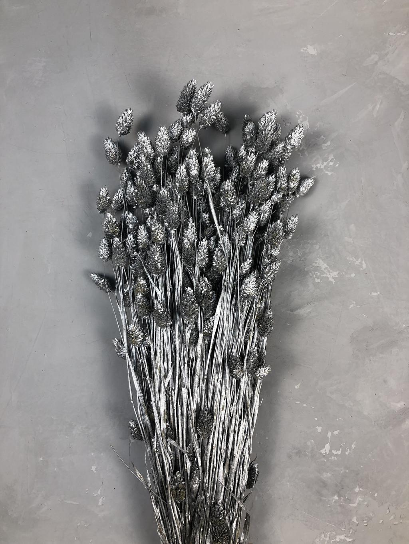 Фаларис серебряный