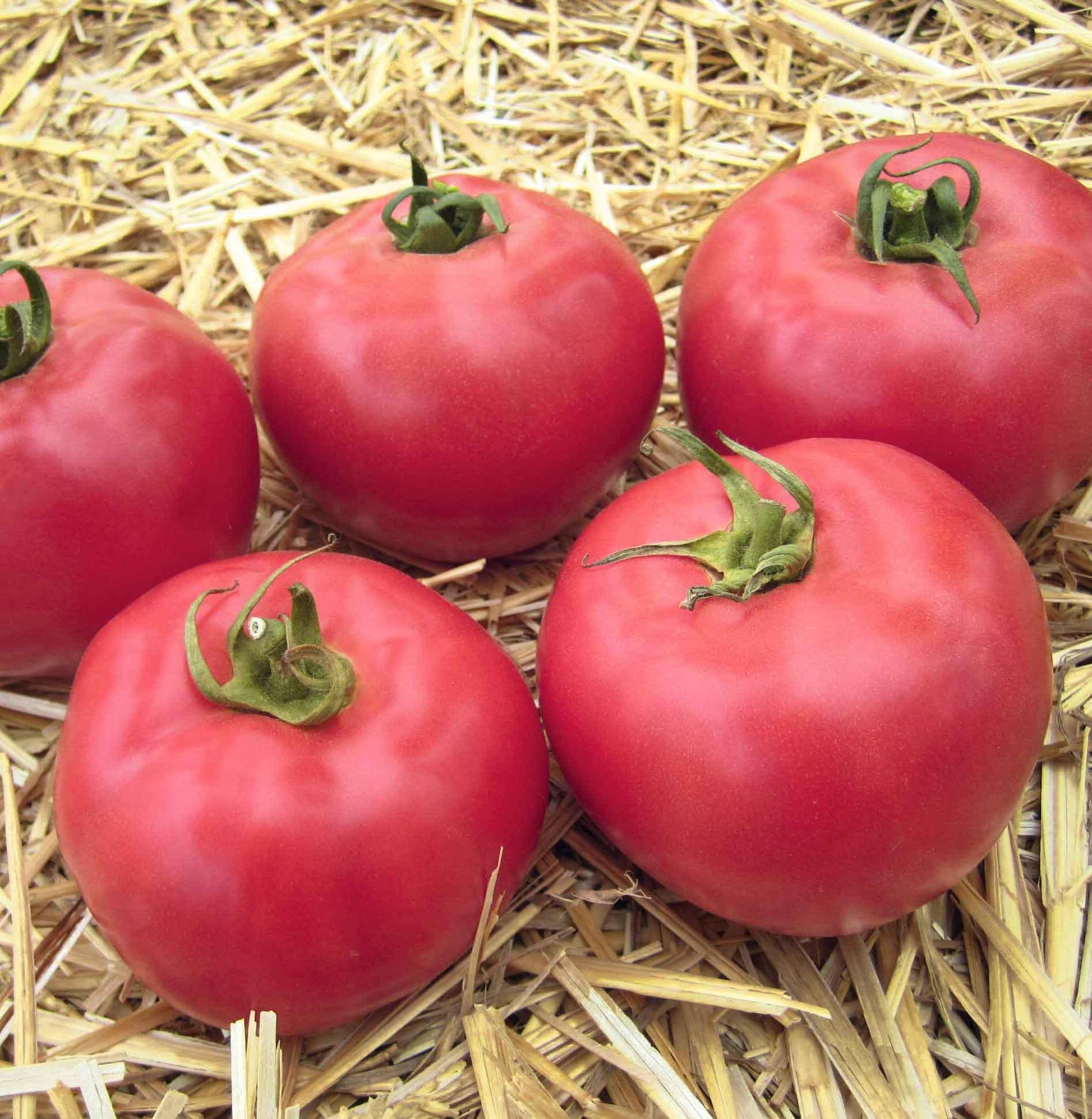 Каталог Юна F1 семена томата индетерминантного (Гавриш) Юна_F1.jpg