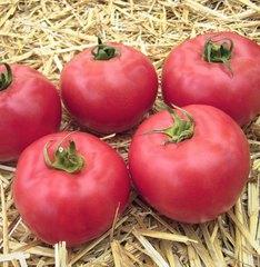 Юна F1 семена томата индетерминантного (Гавриш)