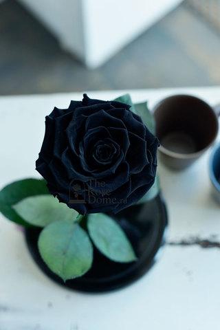 Роза Premium ХИТ Оптом Выс*Диам*Бутон (27*15*11см)Цвет черная