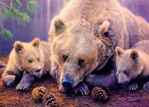 Картина раскраска по номерам 40x50 Семья медведей и шишки
