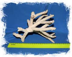 Ветка коралла объёмная крупная 24 см.