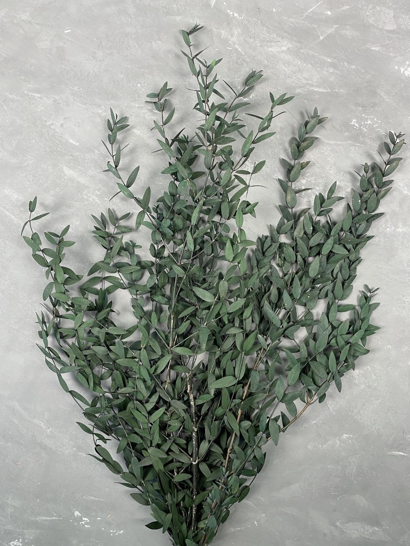 Эвкалипт Парвифолия стабилизированный зеленый