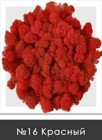 Стабилизированный мох (ягель) цвет №16 Красный