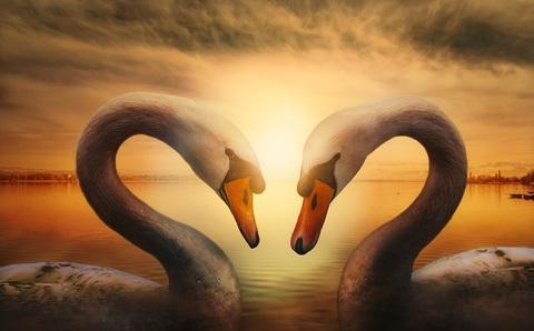 Картина раскраска по номерам 30x40 Лебеди на фоне уходящего солнца