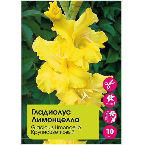 Гладиолус Лимонцелло крупноцветковый 10шт