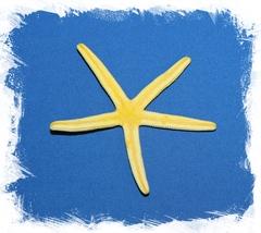 Желтая морская звезда Фингер