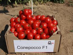 Солероссо F1 семена томата процессингового (Nunhems / Нюнемс)