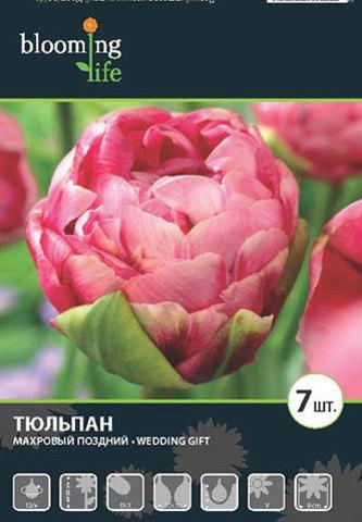 Тюльпан махровый поздний Веддинг Гифт 12/+