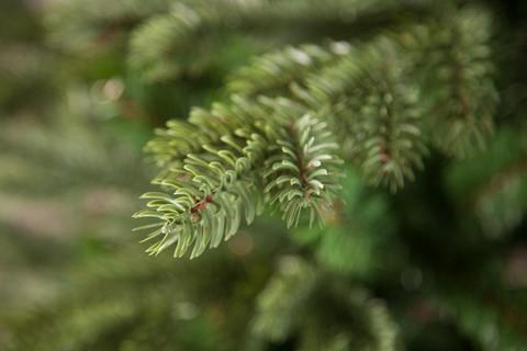Новогодняя елка Triumph Tree Шервуд премиум 230 см зеленая
