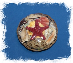 Набор ракушек с красной звездой 14 см