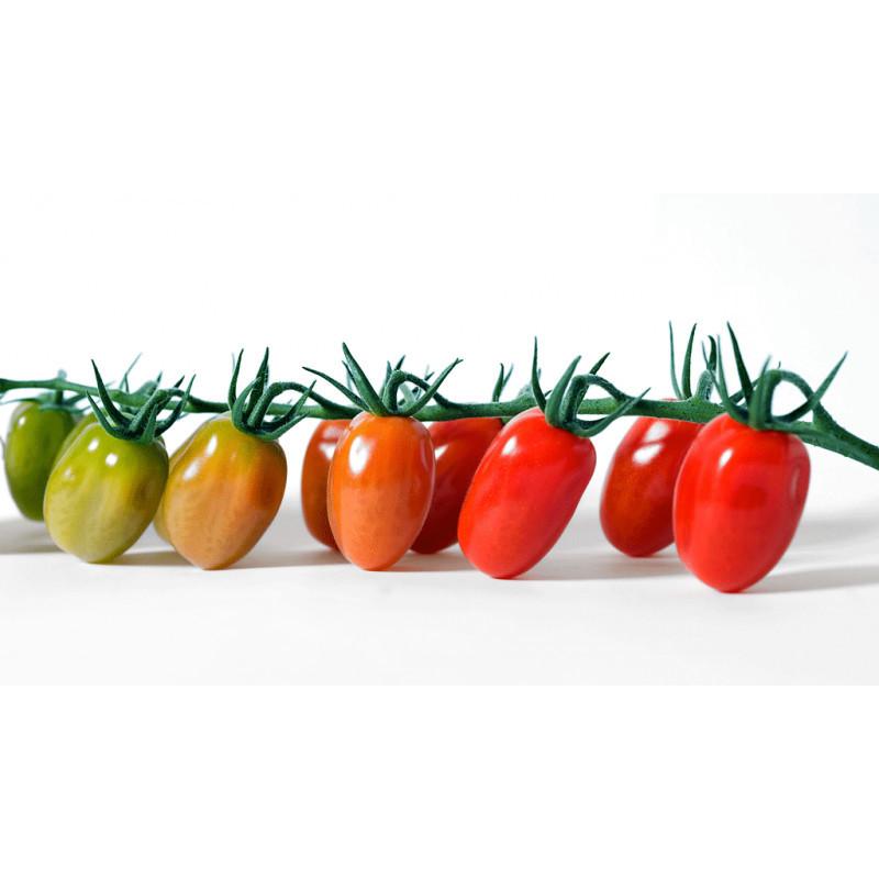 Каталог Анжела F1 семена томата индетерминантного (Syngenta / Сингента) Томат_Анжела.jpg