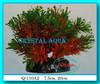 Растение Атман Q-110A, 7.5см
