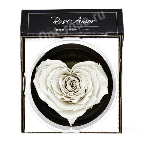 Стабилизированный Бутон Розы Кинг Rose Amor(Эквадор)Bonita Сердце  Цвет Белый (10-12см)