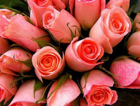 Алмазная Мозаика 5D 40x50 Букет розовых роз вблизи