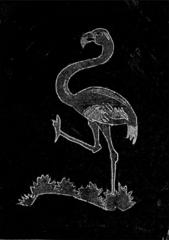 Amateur Bird Watching at Passport Control, Red Flamingo, Bahamas
