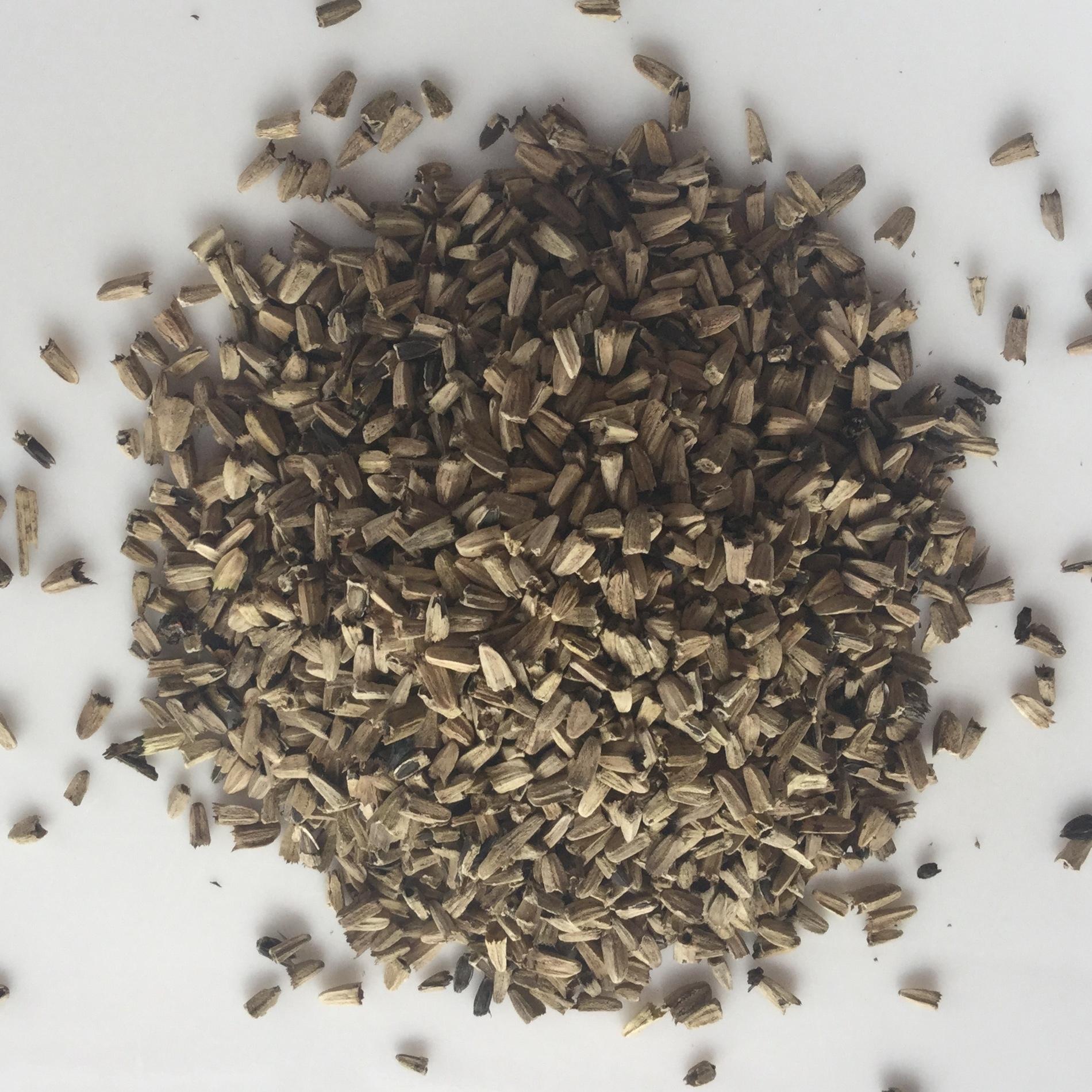 Семена эхинацея