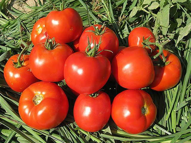 Томат Имран F1 семена томата детерминантного (Enza Zaden / Энза Заден) Имран_F1_семена_овощей_оптом.jpeg