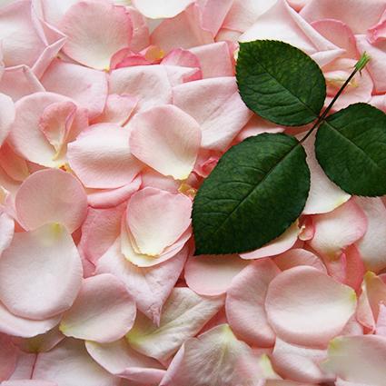 Розы пионовидные Pink O'Hara от 9шт