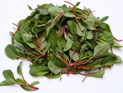 Рубарб семена мангольда (Sakata / Саката)