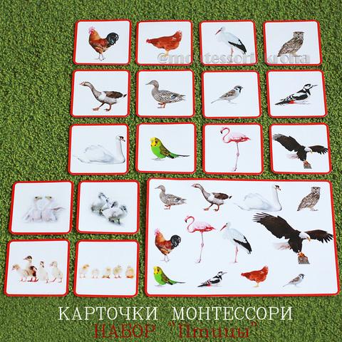 КАРТОЧКИ МОНТЕССОРИ НАБОР «Птицы»