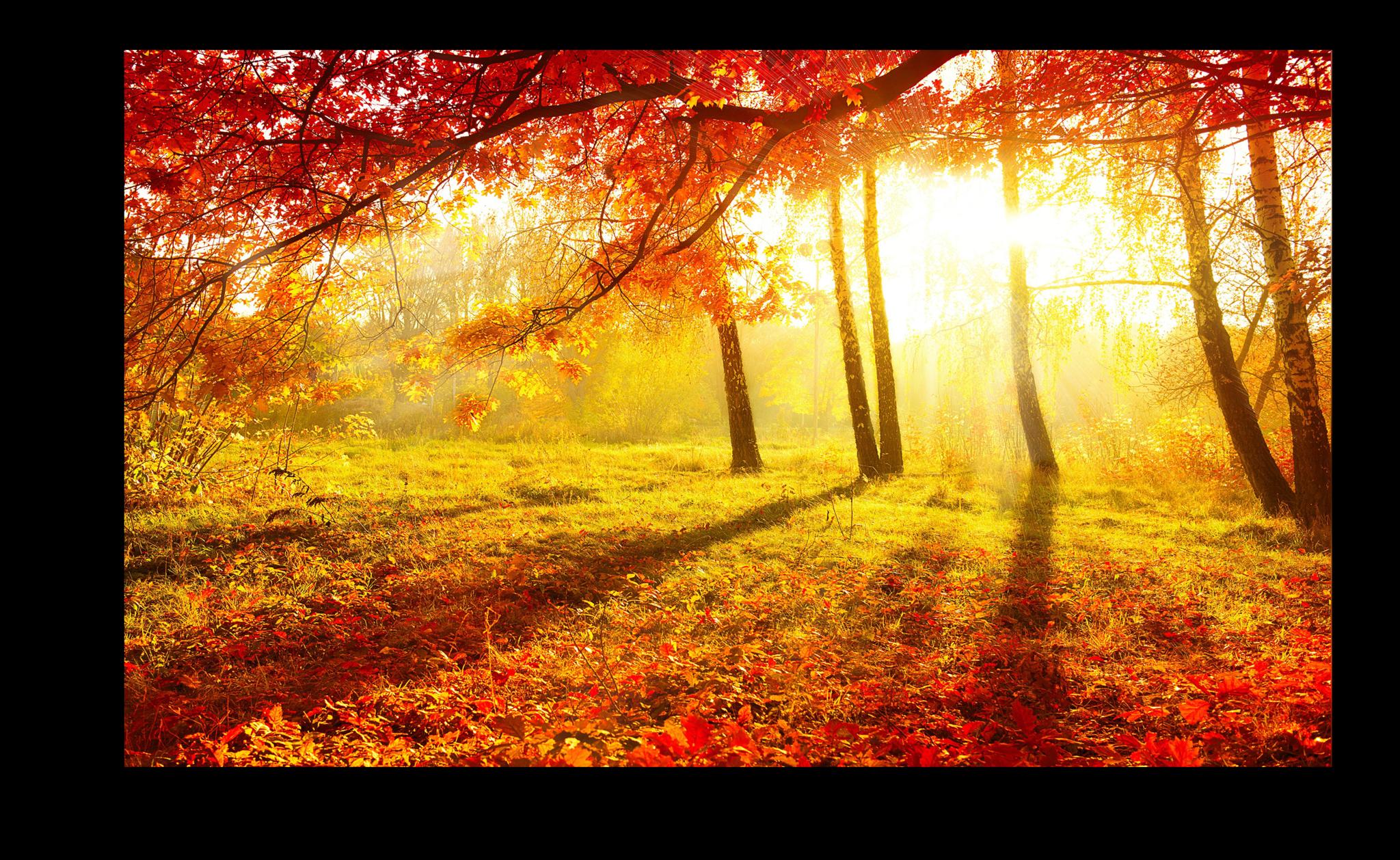 """Постеры Постер """"Осенний листопад"""" п274.png"""