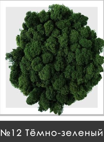 Стабилизированный мох (ягель) цвет №12 Темно зеленый