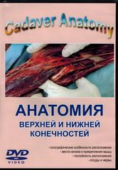 DVD. Анатомия верхней и нижней конечностей