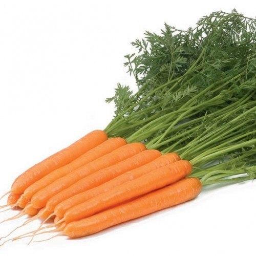 Нантская Рига рз F1 семена моркови нантской (Rijk Zwaan / Райк Цваан) РИГА.jpg