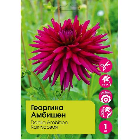 Георгина Амбишен кактусовая 1 шт