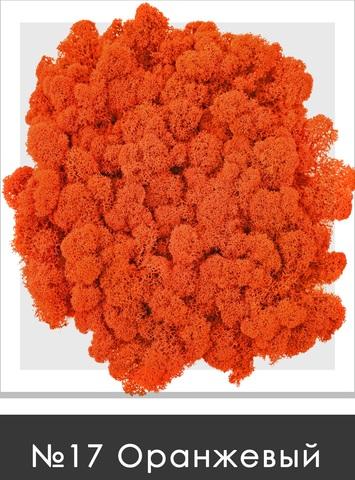 Стабилизированный мох (ягель) цвет №17 Оранжевый