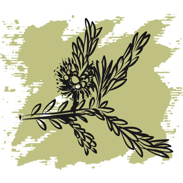 Эфирное масло Чайное дерево, органик