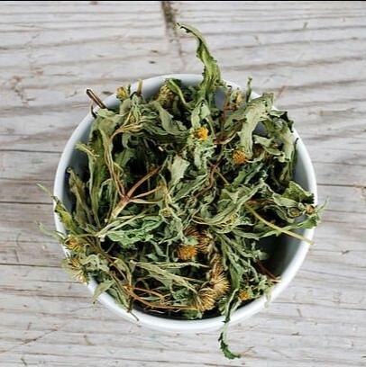 Травы Череда bidens-02.jpg