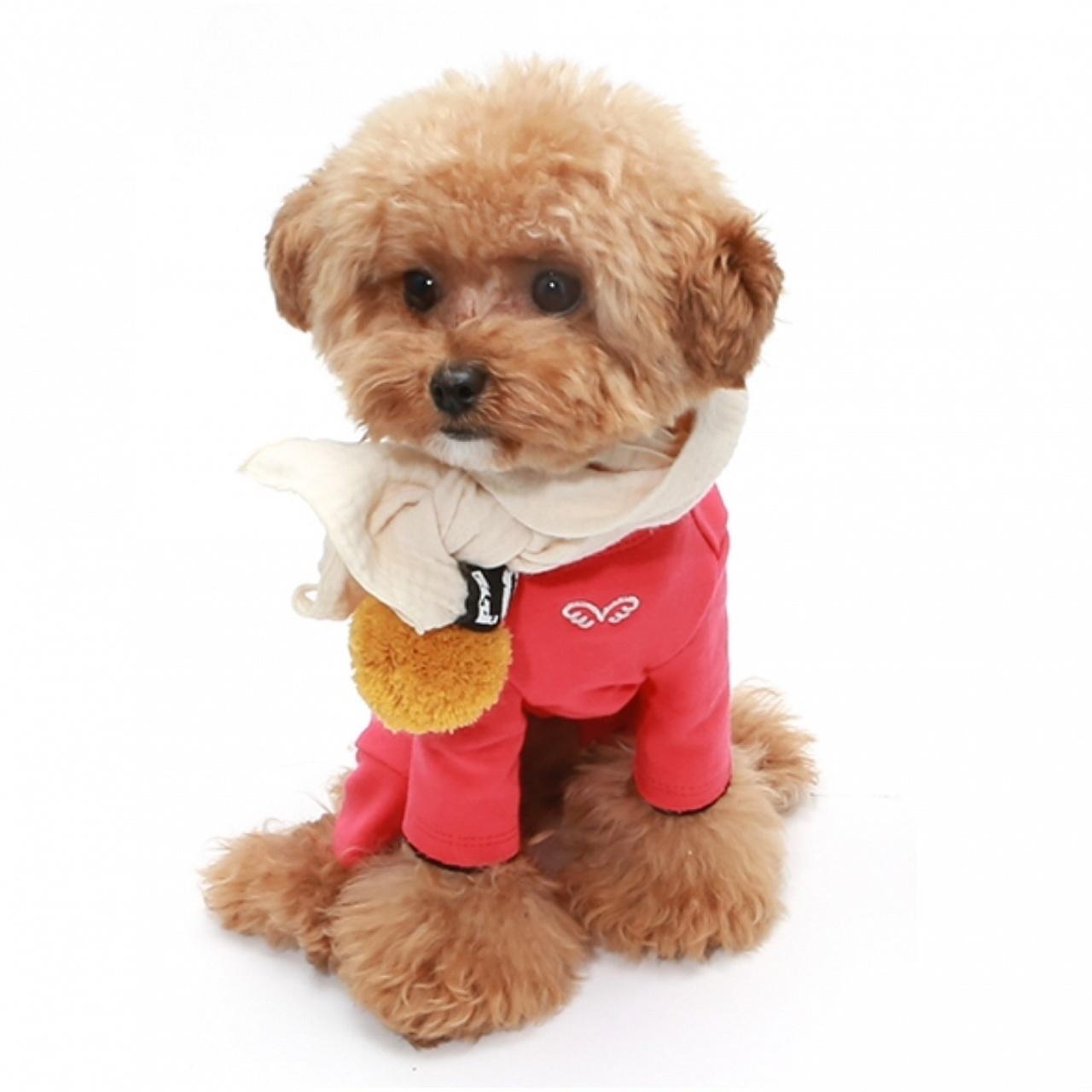 костюмы для собак