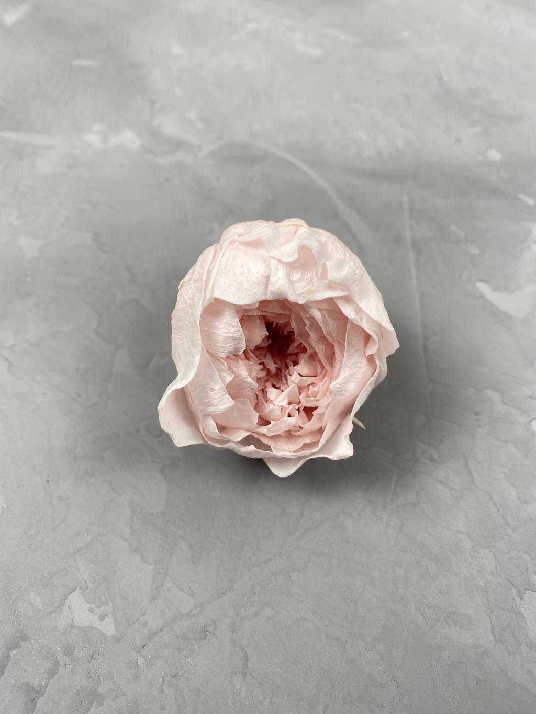 Роза пионовидная розовая d=3-4 см