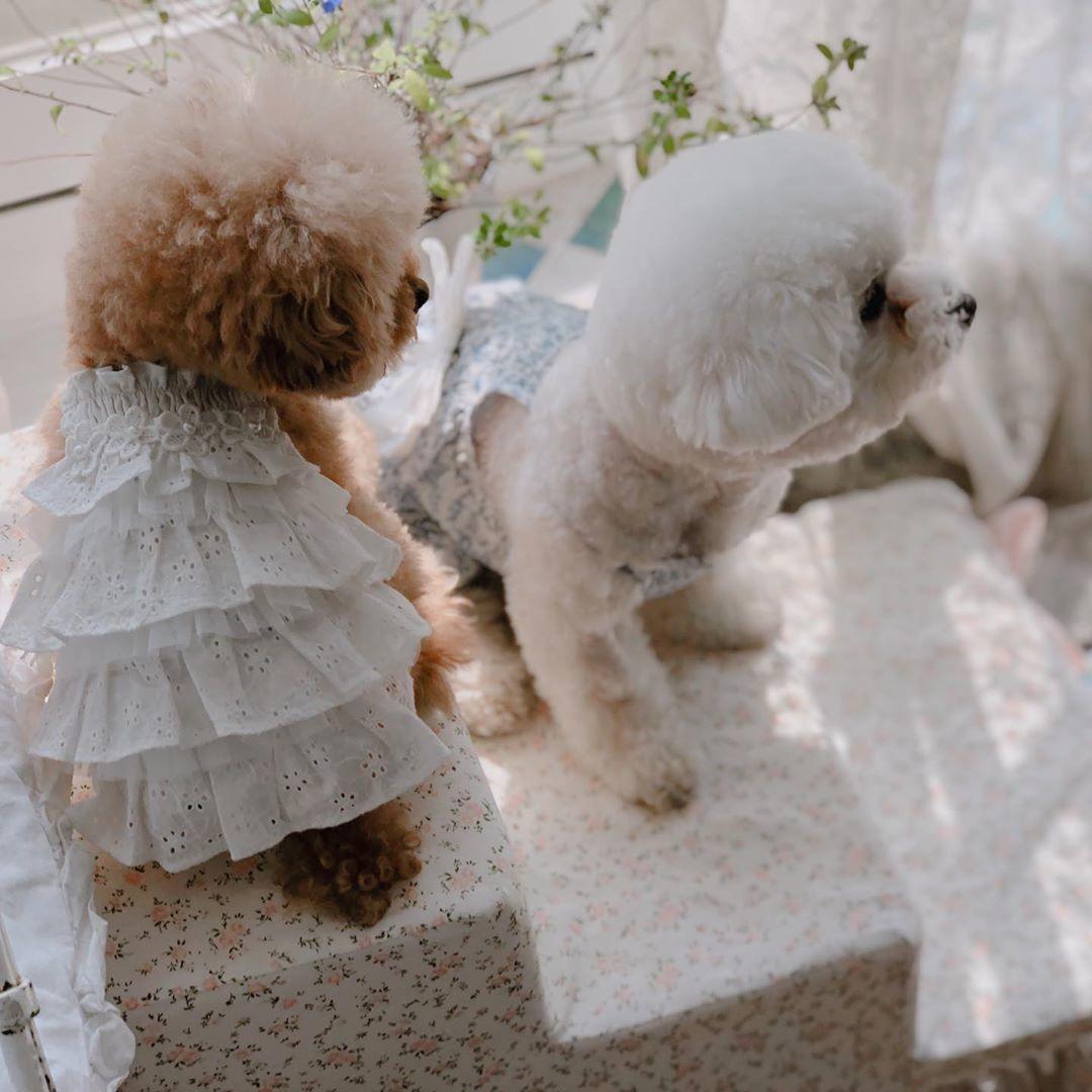 платья для собак puppyangel