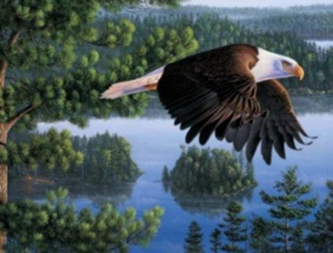 Картина раскраска по номерам 40x50 Орел пролетает над рекой