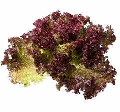 Тамариндо семена салата батавия (Enza Zaden / Энза Заден)