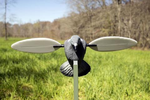 Механическое чучело голубя вяхиря Mojo