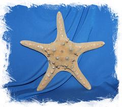 Морские звезды купить для декора